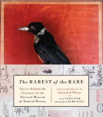Rarest of the Rare Stories Behind the Treasures at the Harvard Museum of Natural History