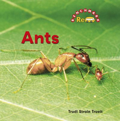 ants benchmark rebus creepy critters rent. Black Bedroom Furniture Sets. Home Design Ideas