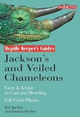 Jackson's and Veiled Chameleons