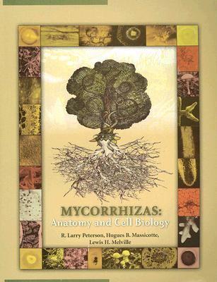 Mycorrhizas Anatomy and Cell Biology