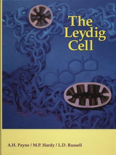 Leydig Cell