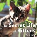 Secret Life of Kittens