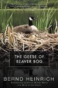 Geese of Beaver Bog