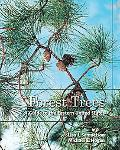 Forest Trees A Guide To The Eastern United States