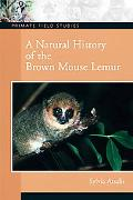 Natural History of the Brown Mouse Lemur