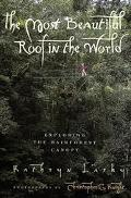 Most Beautiful Roof in the World Exploring the Rainforest Canopy