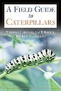 Caterpillars in the Field and Garden A Field guide to the Butterfly Caterpillars of North Am...