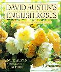David Austin's English Roses Glorious New Roses for American Gardens