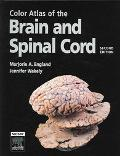 Color Atlas Of The Brain And Spinal Cord An Introduction to Normal Neuroanatomy