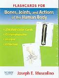 Bones, Joints And Actions of the Human Body