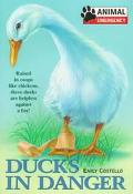 Ducks in Danger: Raised in Coops Like Chickens, These Ducks are Helpless Against a Fox! - Em...