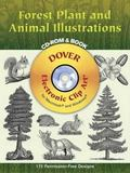Forest Plant And Animal Illustrations