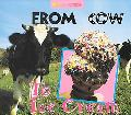 From Cow to Ice Cream