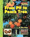 From Pit to Peach Tree