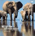 Wildlife Photographer of the Year Portfolio 13