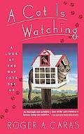 Cat Is Watching A Look at the Way Cats See Us
