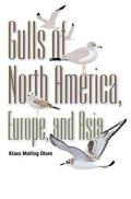 Gulls of North America, Europe, and Asia