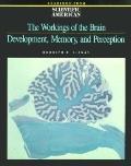 Workings of Brain Dev,memory+percept.