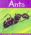 Ants (Insects Series)