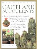 Illustrated Encyclopedia of Cacti and Succulents - Miles H. Anderson - Paperback