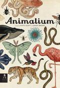 Animalium : Jenny Broom