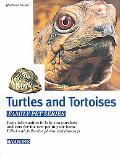 Turtles and Tortoises Caring for Them, Feeding Them, Understanding Them