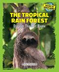 Tropical Rain Forest : Discover This Wet Biome