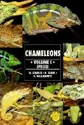Guide to Owning Chameleon Species