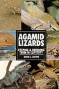 Agamid Lizards Keeping & Breeding Them in Captivity
