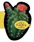 Magnetic Cactus Companion