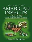 American Insects A Han
