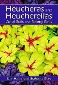 Heucheras And Heucherellas Coral Bells And Foamy Bells