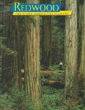 Redwood The Story Behind the Scenery