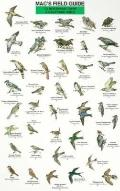 Mac's Field Guide to Northeast Park and Backyard Birds