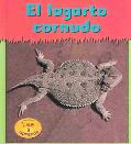 Lagarto Cornudo / Horned Toads