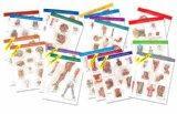 Netter Anatomy Charts: Complete Set of 20 Charts, 1e (Netter Charts)
