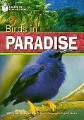 Birds in Paradise (US)