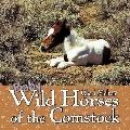 Baby Wild Horses of the Comstock