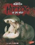 Hippos: In the Wild (Killer Animals)