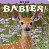 Deer Babies!