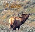 Idaho Wildlife Impressions