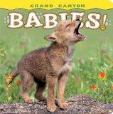Grand Canyon Babies