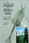 Fossils of the Burgess Shale