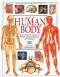 Human Body An Illustrated Guide to Its Structure, Function, and Disorders