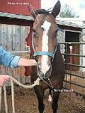 All Horse Systems Go The Horse Owners Full-Color Veterinary Care And Conditioning Resource F...