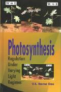 Photosynthesis Regulation Under Varying Light Regimes