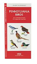 Pennsylvania Birds An Introduction to Familiar Species