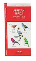 African Birds An Introduction to Familiar Species