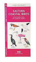 Eastern Coastal Birds An Introduction to Familiar Species