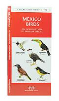 Mexico Birds: An Introduction to over 140 Familiar Species